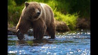 Жив-здоров: пострадавший от нападения медведя тундровик идёт на поправку