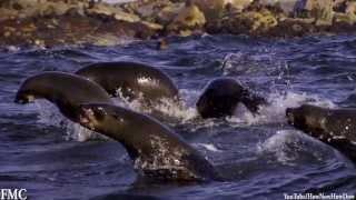 Красота природы / Awesome Animals