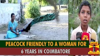 Peacock Friendly To A Woman For 6 Years in Coimbatore spl tamil video news 03-09-2015