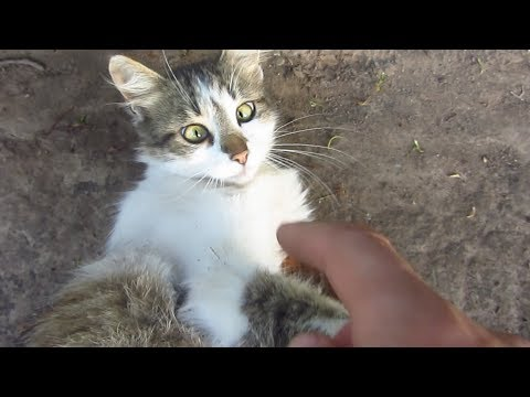 Kitten with cute eyes purrs on the street