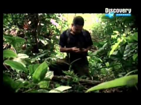 Fuga de las FARC Documental