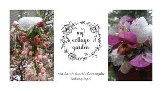 Rosenschnitt und ein Trick für viele Blüten