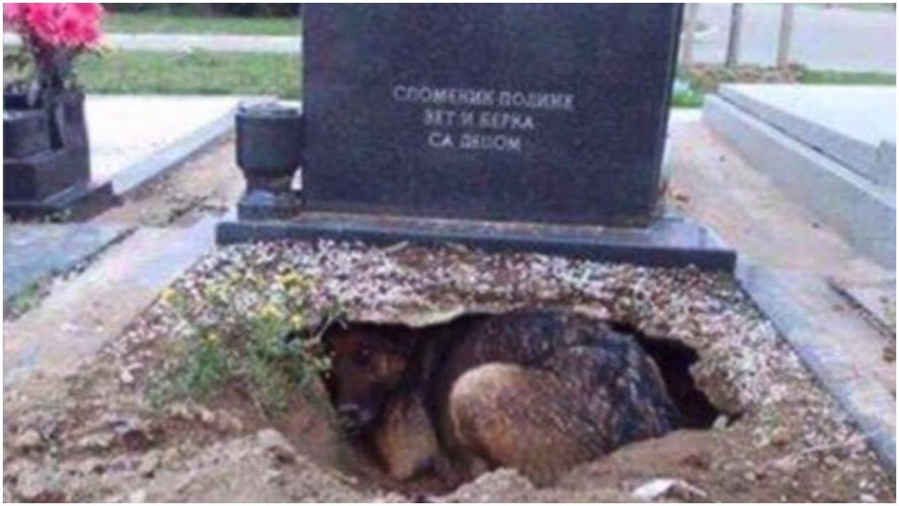 people-said-this-dog-was-guarding-her-owner-s-grave-but-one-rescuer-uncovered-a-stunning-secret