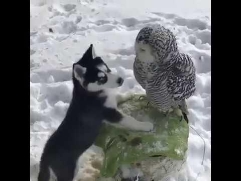 Cane e gufo migliori amici!! Guardate che belli!!