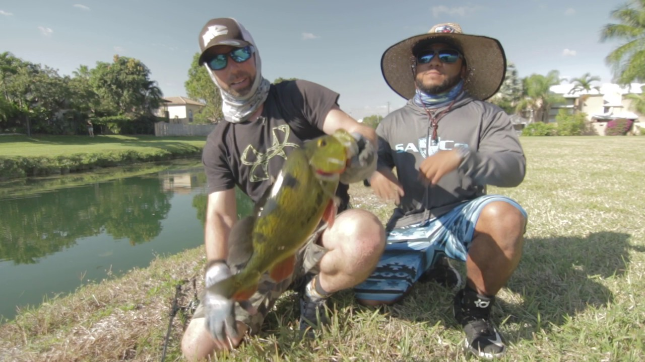4c38a10b06 Miami Street Fishing for Peacock Bass!!!!(Going Ike S2 - Episode  2 ...