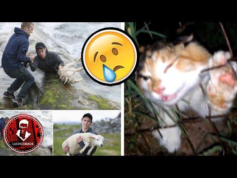 TOP 7 ANIMALES SALVADOS POR HUMANOS CAPTADOS EN CAMARA