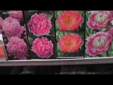 Рай для цветоводов. Посадочный материал в магазине ОБИ