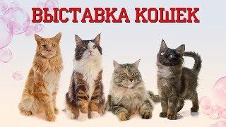 Выставка кошек в Сокольниках 2019