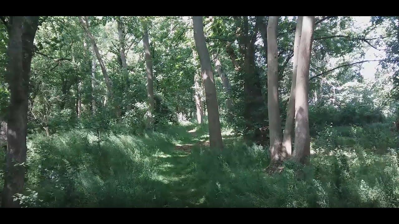 TCAG on woodland - ITV News (Meridian, London, Anglia)