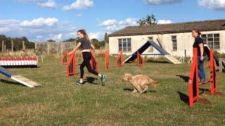 Dog Agility Fun 2 -cockapoo Training
