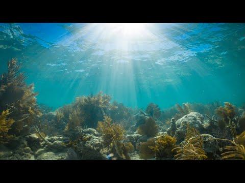 Islamorada Florida Keys Snorkeling & Hog Fish Snapper Fishing