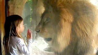 Молодой лев в детской кроватке