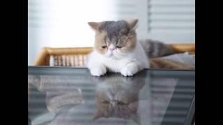 オトナ女子 ちくわ 猫 ブサかわいい