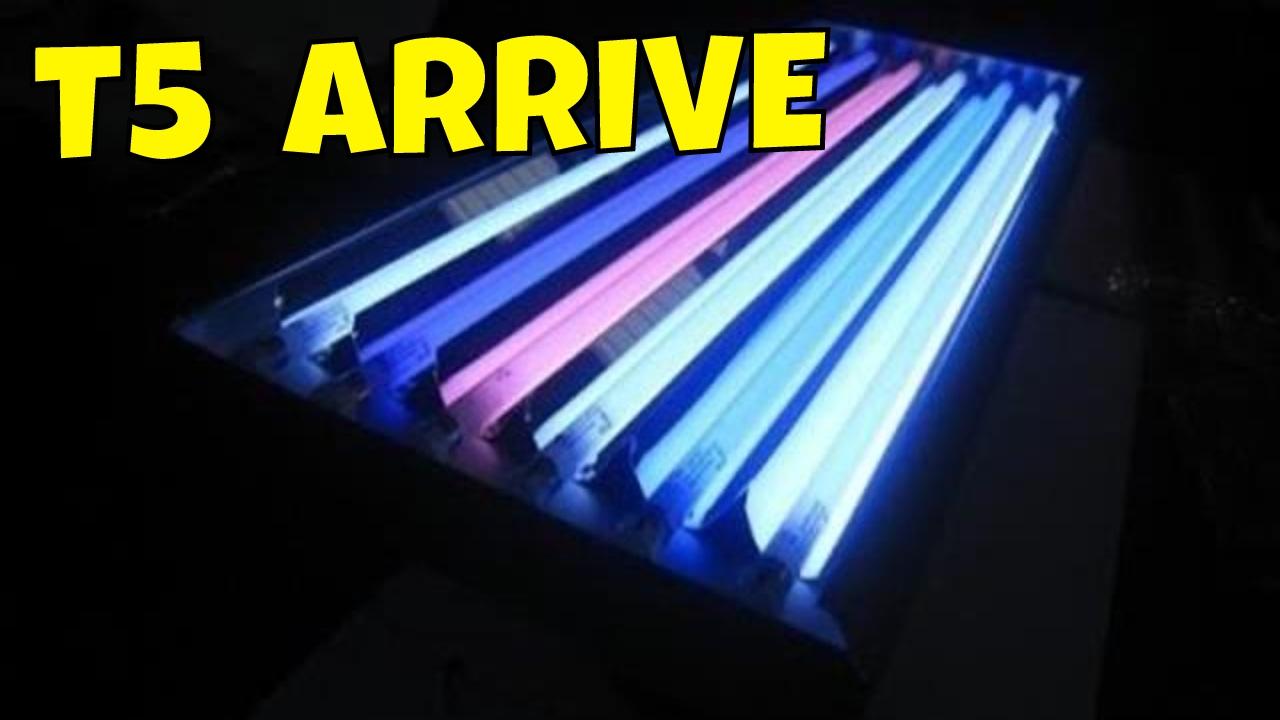 T5 Aquarium Light -ati T5 Bulbs - Coral Lighting