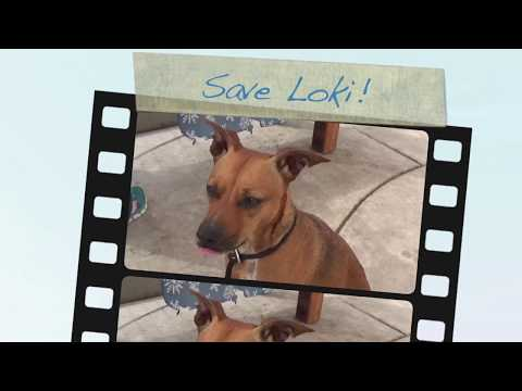 Save Loki! Nice Shelter Dog Needing Rescue ASAP To Save His Life!