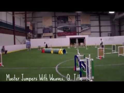 Diego AKC MXJ Master Jumpers Title Run 4/26/14