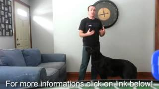 How to stop a dog from urinating in the house , stop dog to jumpin on you - dog house training tips