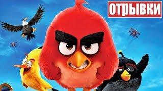 Angry Birds в Кино [2016] Отрывки Мультфильма