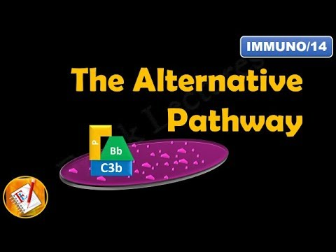 The Alternative Pathway - The Complement System Part II FL-Immuno14