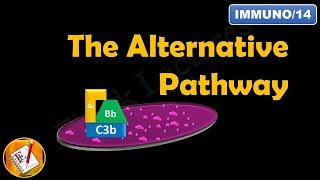 Baixar The Alternative Pathway - The Complement System (Part II) (FL-Immuno/14)