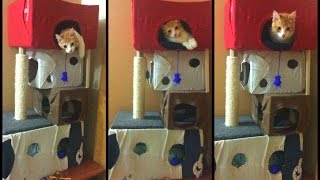 Como hacer una casa - torre a tu gato con cartón!!! DIY 🏠😸