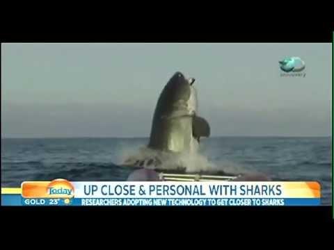 本物!?オーストラリアの海で撮影された巨大サメの映像
