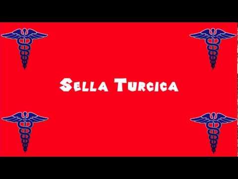 pronounce medical words ― sella turcica - youtube, Human Body