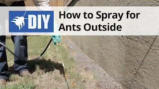 How to Spray for Ants Outside