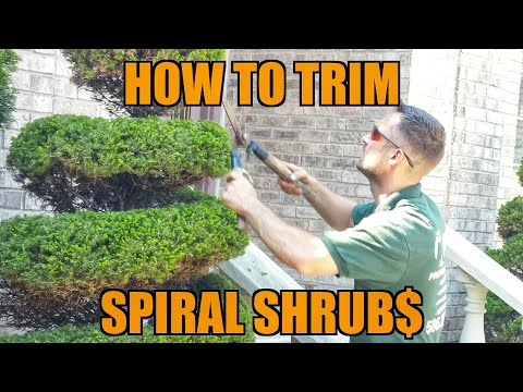 (Episode#13) How to Trim Topiary Shrubs + Landscaping Business Chat