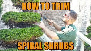 (Episode#13) How to Trim Topiary Shrubs + Landscaping Business Chat = Success