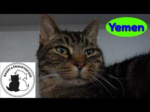 Yemen: Wood County Humane Society