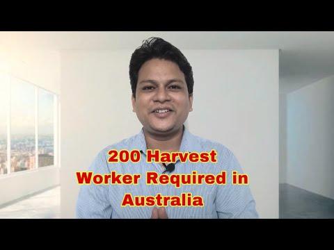 200 Harvest Worker Required In Australia
