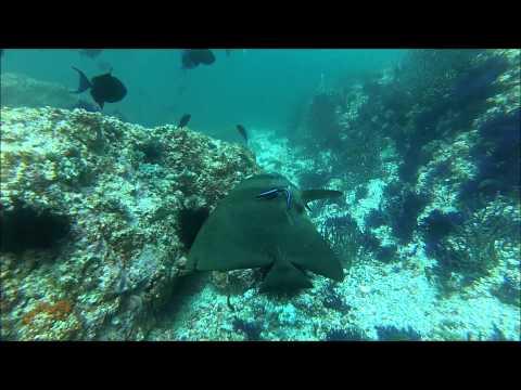 Great vis / light current on Octopus Rock, Musandam, Oman