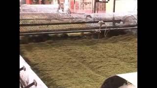 Kenyan Tea. Gathuthi Tea Factory