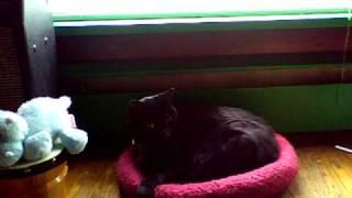 my kitty part 1