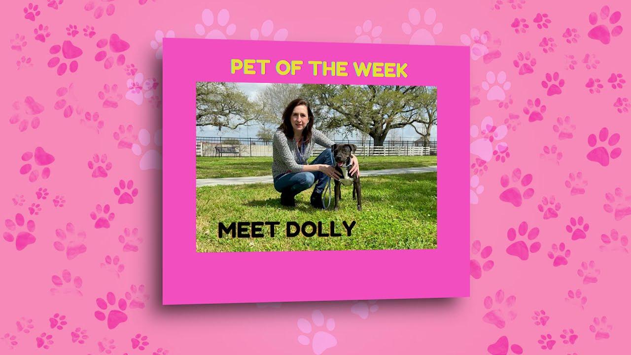 Meet Dolly- Pet of the Week