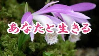 作詞:田久保真見/ 作曲:弦 哲也/ 編曲:前田俊明.