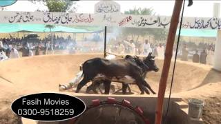 Akhara Jhanghir 20-09-2015 ladi group part 4
