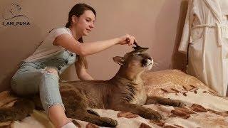 Релакс. Жизнь большого кота. Relax. The life of a big cat.
