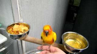Bird in a NY Pet store