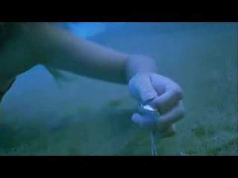 Deutsches H2O - Plötzlich Meerjungfrau Forum