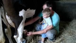 """Agroturystyka  Pod Brzozami """"dojenie krowy"""""""