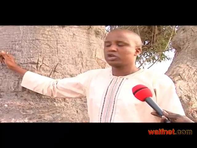 Maraboutage au Sénégal : les liens entre les arbres