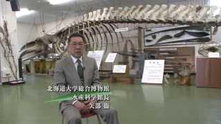 北海道大学総合博物館分館水産科学館 矢部衞館長挨拶