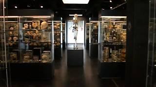 Vrolik Museum Amsterdam 2017