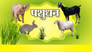 बकरी पालन में इन बातों का रखें ध्यान