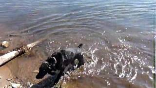 Lola swimming in a cold lake