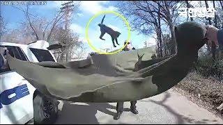 고양이를 담요로 구출하는 미국경찰