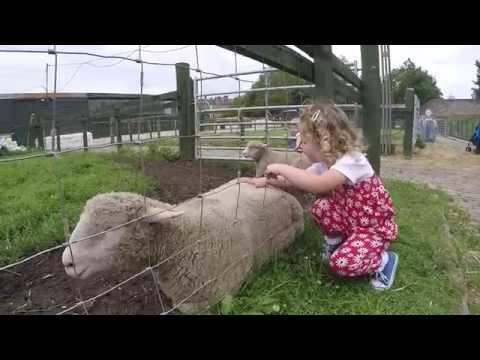 Gorgie Farm - Edinburgh
