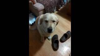 Owner Tries to Figure out Which Dog Ate Her Cookies